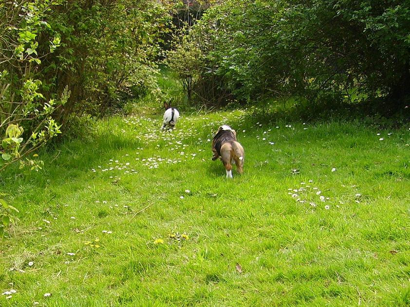 Baltazar et le lapin