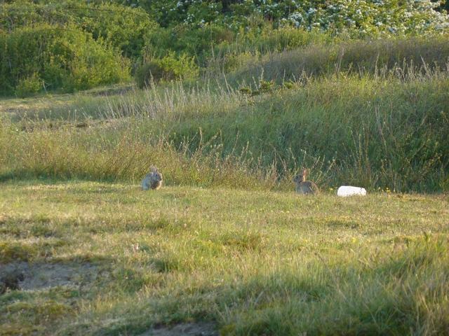 Jeunes lapins à l`écoute
